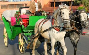 In viaggio a Marrakech: consigli e informazioni
