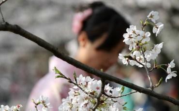 Pensieri sparsi sul Giappone