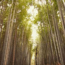 Il cielo minaccia pioggia ma nella foresta di Bambù di Arashiyama si avverte solo un leggero vento che muove questi esili giganti della Natura. E' uno spettacolo incredibile.
