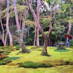 Un tappeto di muschio sovrastato da alti arbusti. Un profumo indimenticabile di terra bagnata. Uno dei giardini più belli che io abbia mai visto: è il fatato Giyo-ji, a Kyoto.