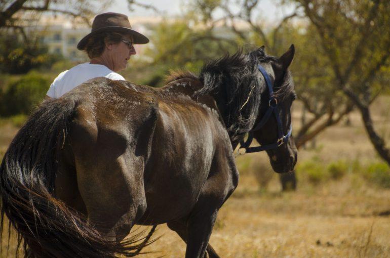 Horse Rescue, Algarve