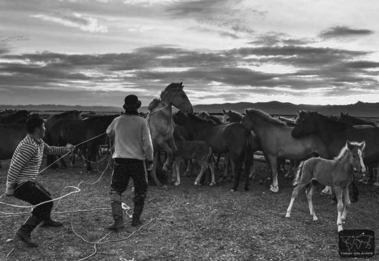 nomadi carne di cavallo