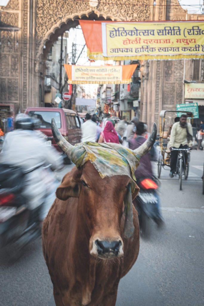 india mucca nel traffico