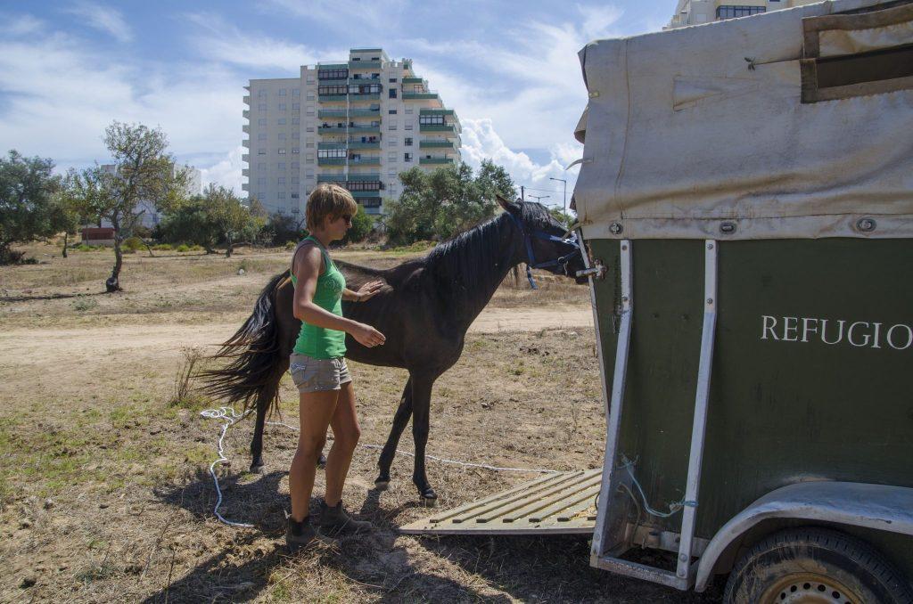 La mia prima esperienza di volontariato con i cavalli in Portogallo