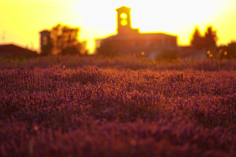 tramonto campi di lavanda