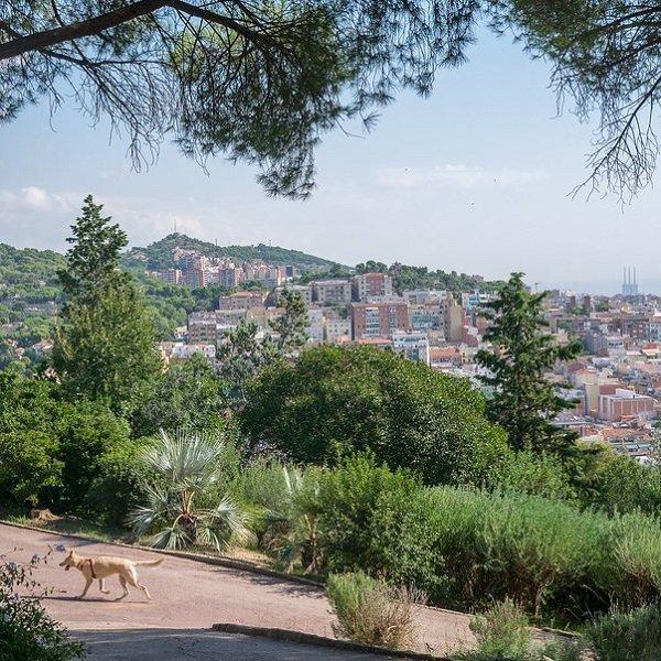 Parc Túro del Putxet I luoghi più belli di Barcellona per passeggiare