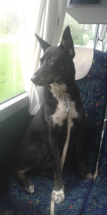 Dog in Via Globe Bus