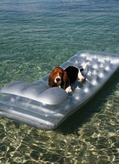 Dog water matress Jarun Zagreb