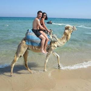 hammamet camel