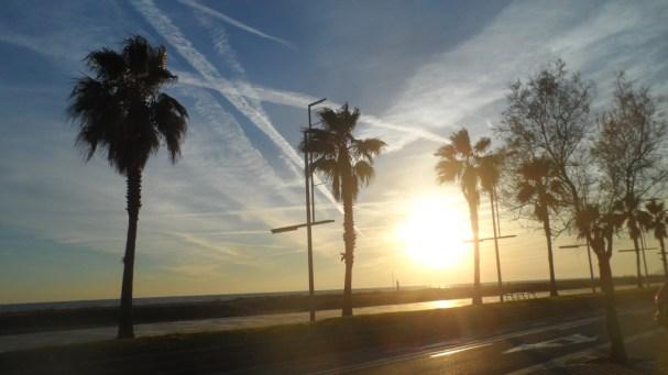 Las palmeras en sombras en este lado. Gavá.