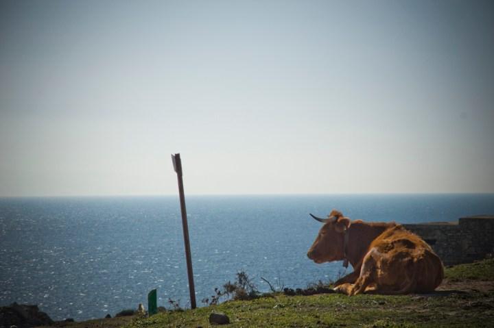 Ruta-senderismo-Algeciras-Tarifa-colada-de-la-costa-vacas1
