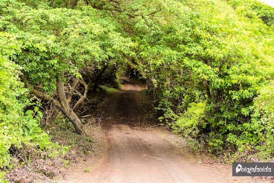 Túnel de hojas.