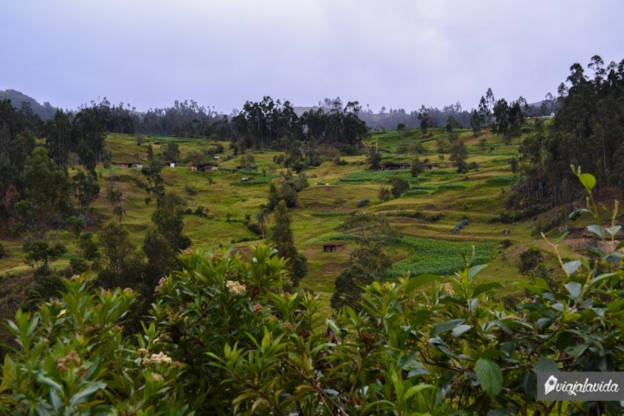 Extenso campo verde.
