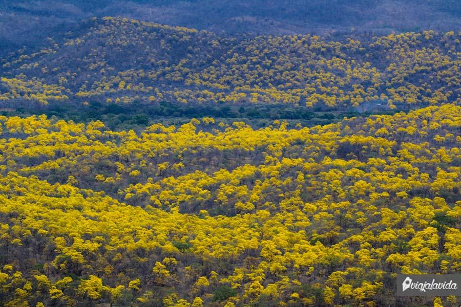 Cerro amarillo.