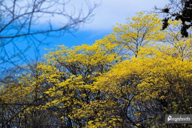 Más amarillo.