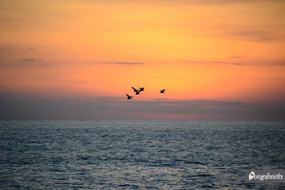 Aves sobre el mar.