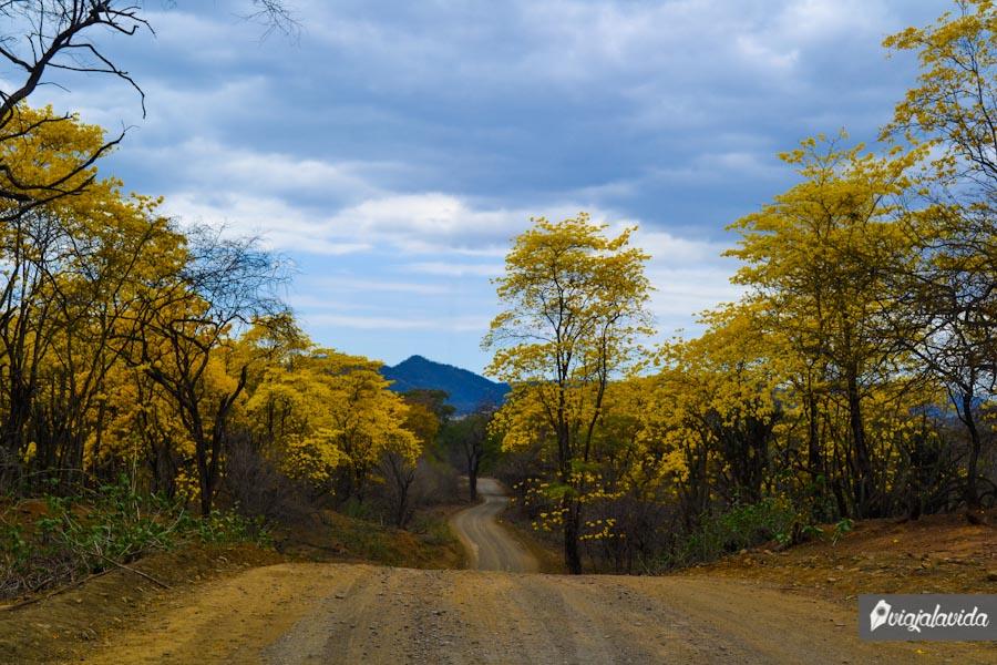 Carretera de tierra con árboles