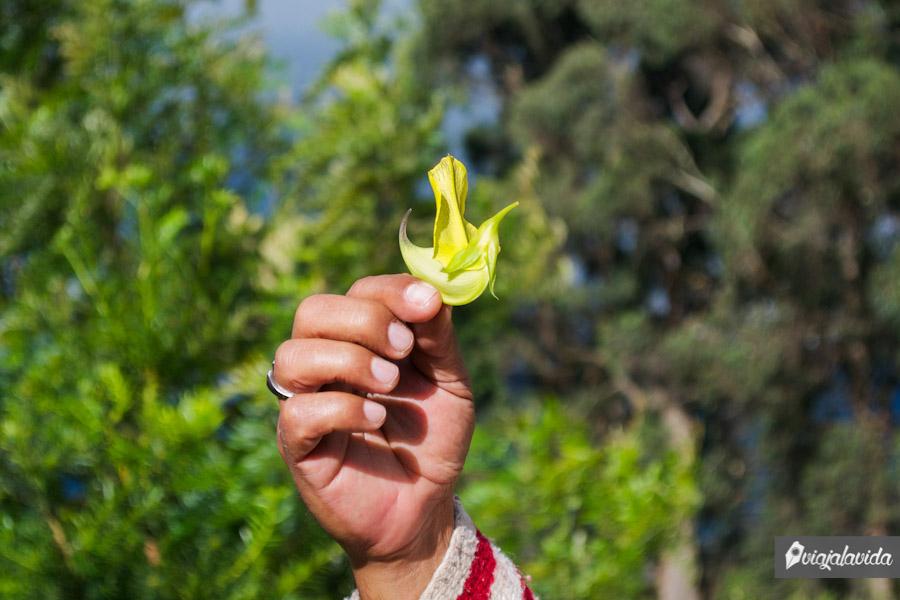 Hombre sosteniendo una hermosa planta en la mano