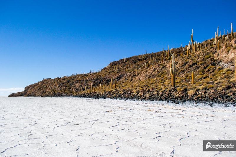 Isla Incahuasi en el Salar de Uyuni.