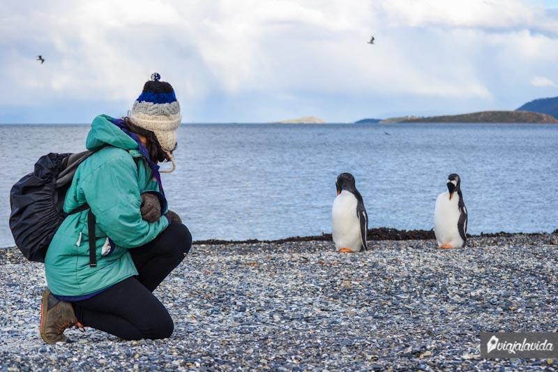 Caminando con pingüinos.