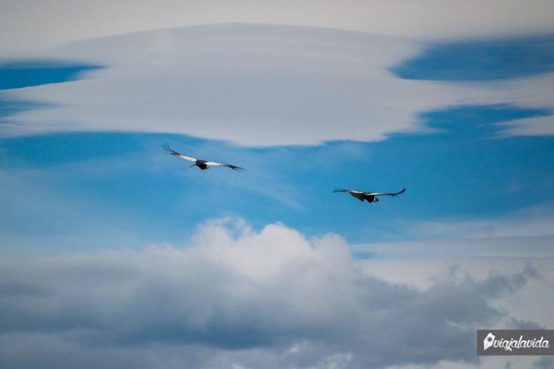 Cóndores en el cielo.