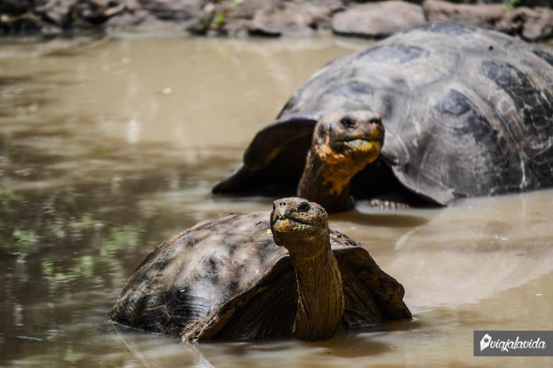Tortugas en la Galapaguera.