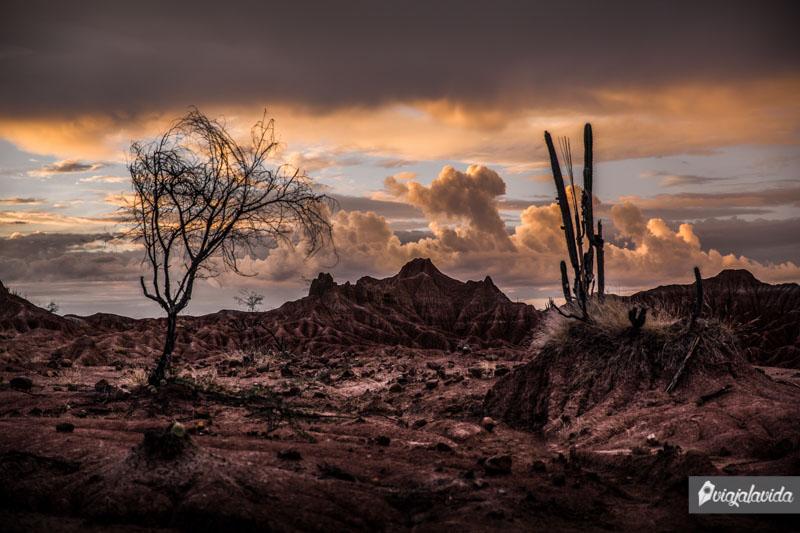 Paisajes del desierto.