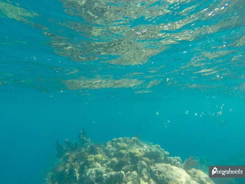 La barrera de coral en Útila.