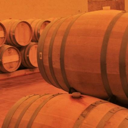 Concha y Toro: degustação e tour na maior vinícola do Chile