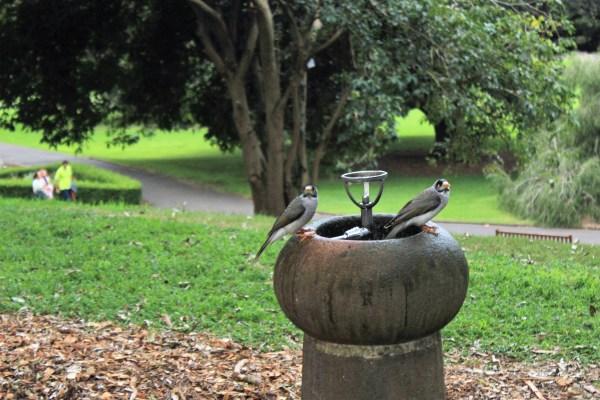 Royal Botanic Garden, Sydney