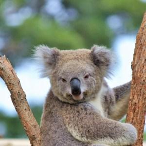 Taronga, um incrível zoológico que encanta crianças e adultos em Sydney