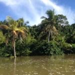 Dicas para conhecer a Ilha de Marajó – passeios, onde ficar, onde comer
