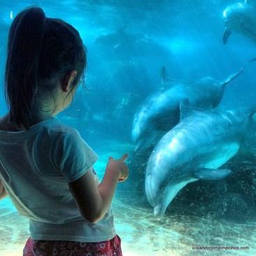 Pimpolhos no Sea World