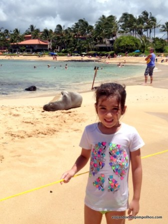 Poipu Beach with Hawaiian Seal Monkey