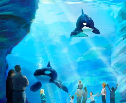 Sea World anuncia o projeto Blue World: novo habitat para as Orcas e investimento de US$ 10 milhões em pesquisas e conservação