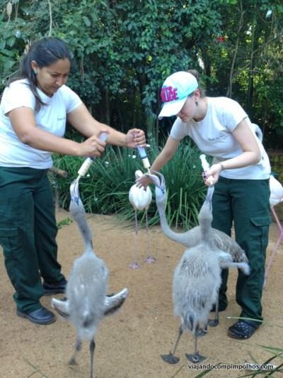 Parque-das-aves-foz-do-iguacy