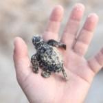 Curtir e Preservar: o Sea World lança programa de preservação no Brasil!