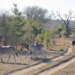 Novos destinos de safáris com crianças na África!