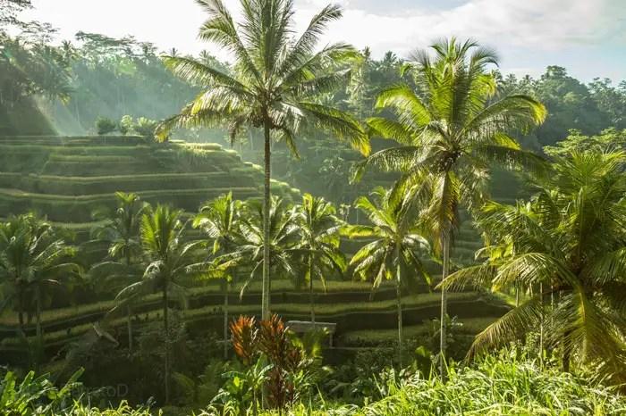 bali-luis-barreto-colombianos-viajando-2