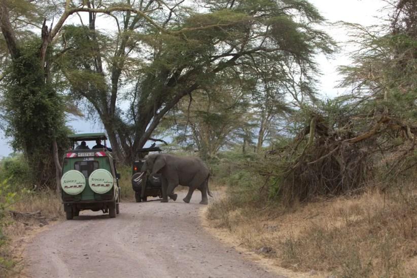 viajando-tanzania-safari
