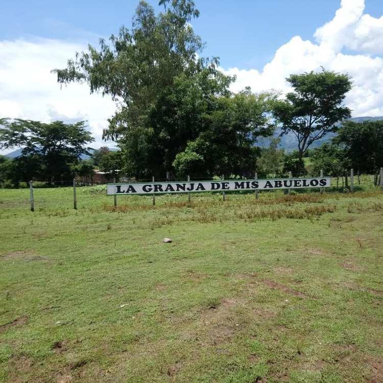 Campo de Girasoles en El Salvador