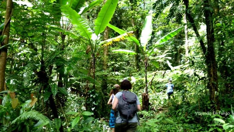 Trekking por la jungla malaya