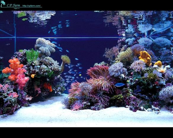 aquario_marinho_agua_salgada