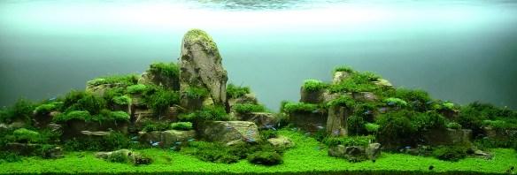 aquario_plantado_aquapaisagismo (5)