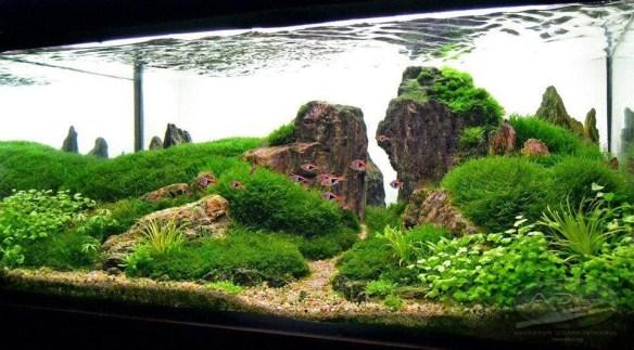 aquario_plantado_aquapaisagismo_15