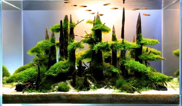aquario_plantado_aquapaisagismo_9