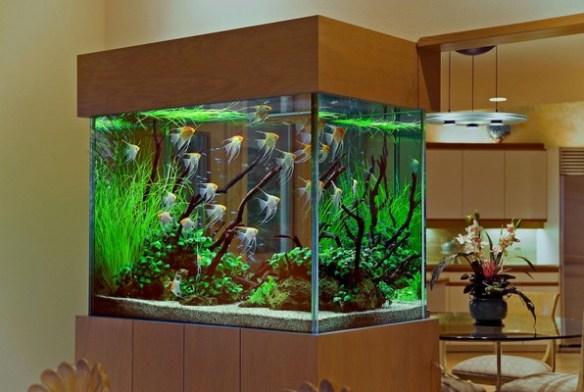 aquarios plantados