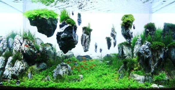 aquarios plantados_aquapaisagismo_13
