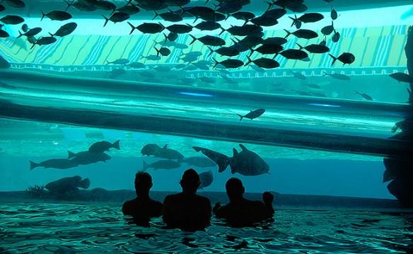 aquário_hotel_las_vegas_3