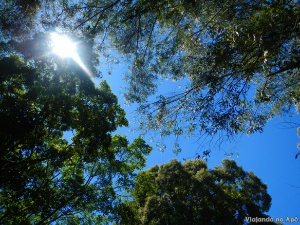 arvores ceu natureza camping Ze Roque Joanopolis